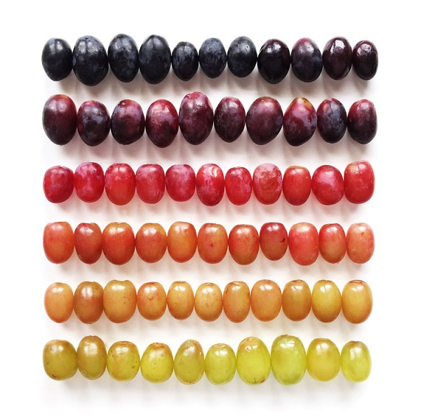 Brittany Wright Food Gradients raisins